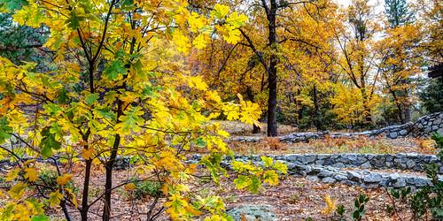 california trees landscape fallcolors idyllwild highdynamicrange lakefulmor sdosremedios size1x2 ©stevendosremedios