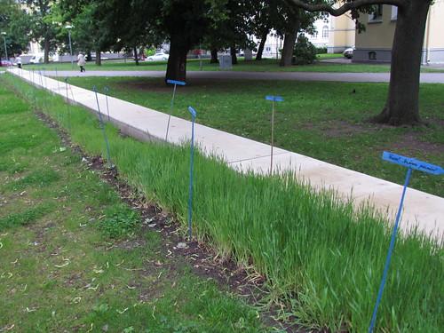 Marje Taska: Pluralistic Spring Planting