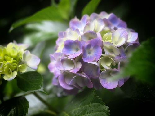 2012.06.30(P6129791_14-35mm_Sunlight