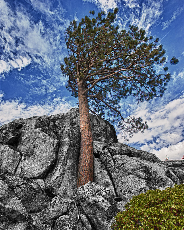 Tree in Rock
