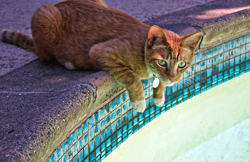 Feline Friday: Pool cat