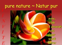 pure nature icon post your work here 080712