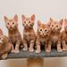 Kitten Break! by Bubba Trout