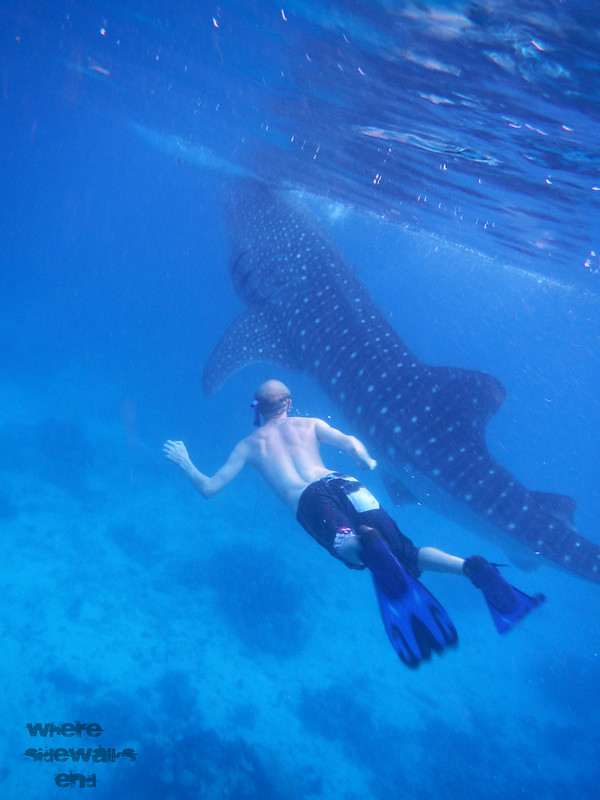 Whale Sharks skin diving in Oslob