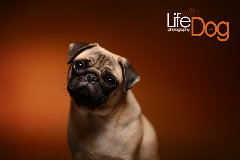 Lifewithdogpic003
