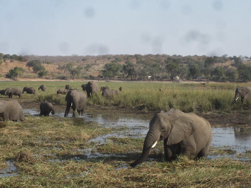 Chobe Botswana Elephants Africa