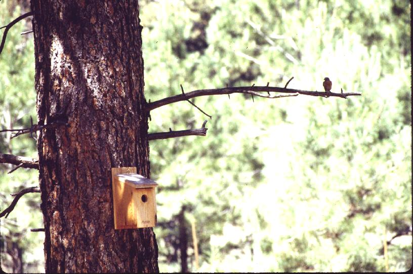 Avian nest box on LANL land