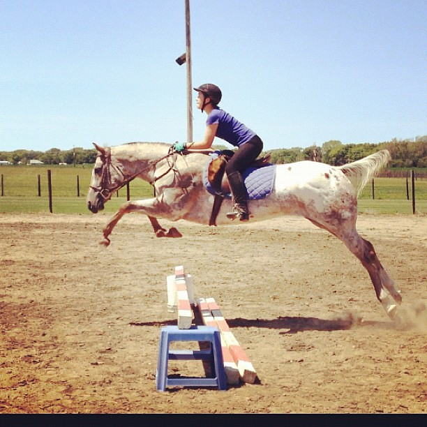 Take Flight #horse #jump