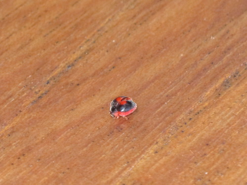 Tiny bug on the table