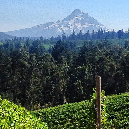 Stupendous view of Mt. Hood from Phelps Creek. #wbc12