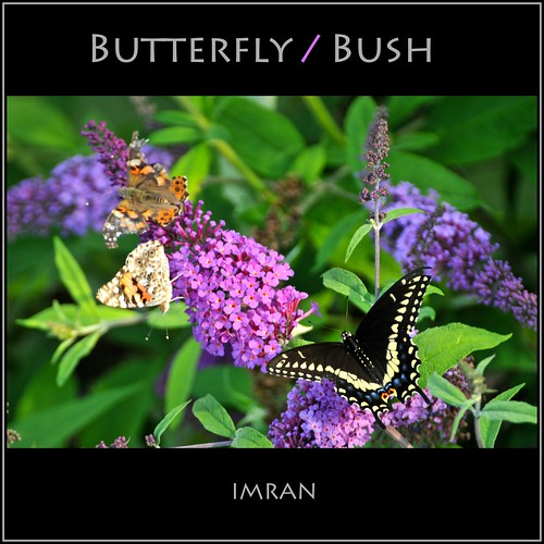 Butterfly / Bush / (Whacked) - IMRAN™ -- Thanks For 1 MILLION Views! by ImranAnwar