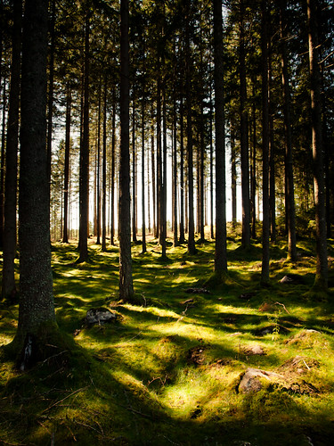 trees sunlight green forest moss view sweden swedish