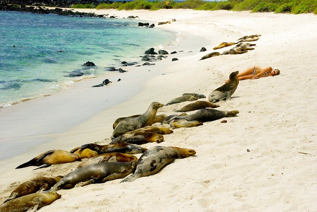 sleeping with sea lions in galapagos islands