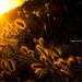 Shade of sundown ... (Explorer # 51) by Tri Nguyen | P h o t o g r a p h y