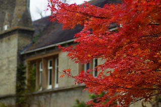 Red leaves in front of RSPB HQ