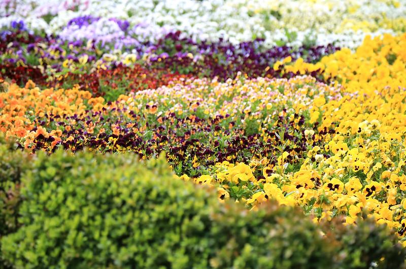 fleurs colorées jardin botanique de madrid