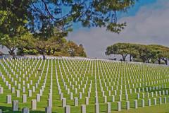 """""""Damn the wars but bless the soldier.""""  ~~T.L. Moffitt"""