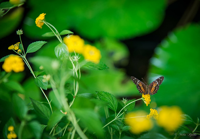 Butterfly moment