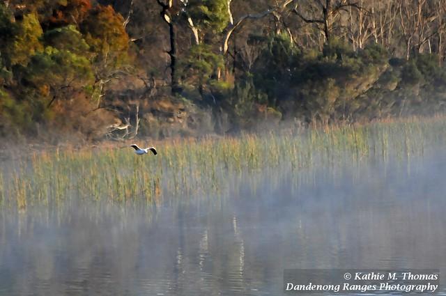 Lake, mist and a bird
