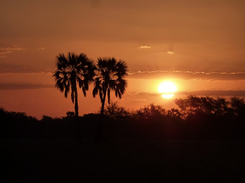 Mozambique tree sunset