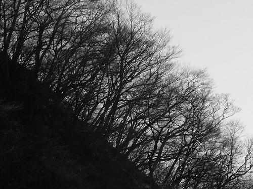 bw mountain tree japan forest spring nikko