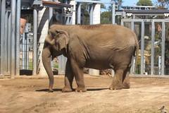 IMG_3654: Elephant