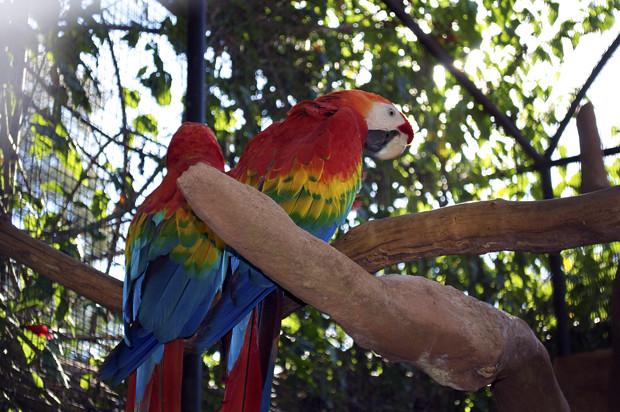 Parque das Aves 4