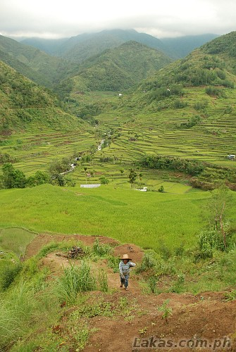 Nungulunan Rice Terraces in Hungduan, Ifugao