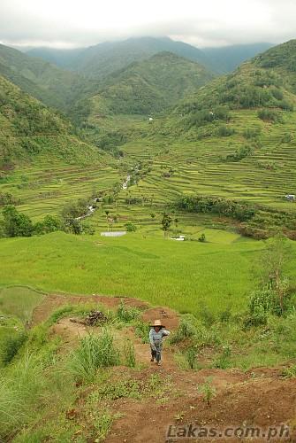 Nungulunan Rice Terraces in Hungduan, Ifugao