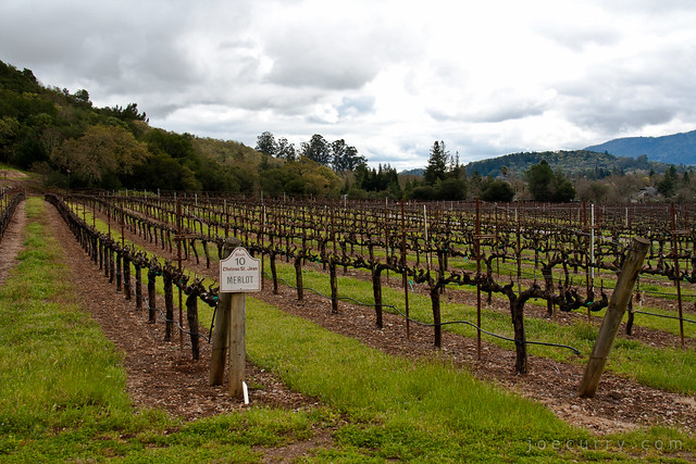 Sonoma County - Chateau St Jean
