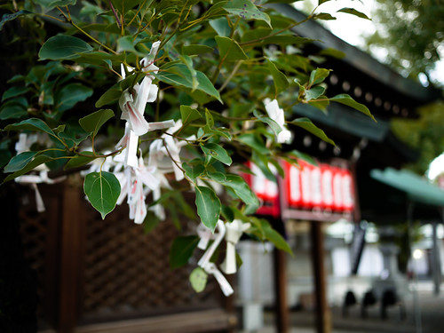 Tying Omikuji by hyossie