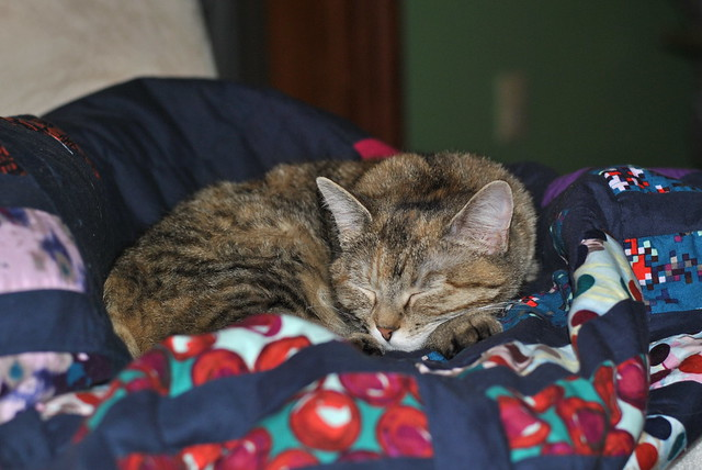 Chloe on a quilt
