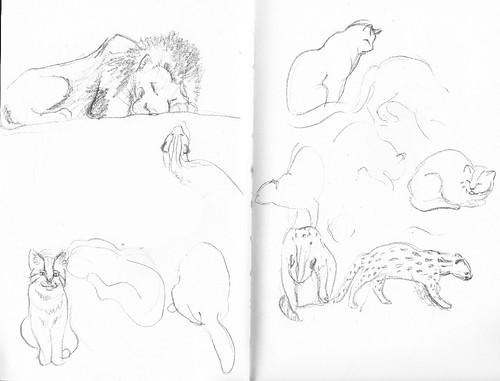 zoo sketch