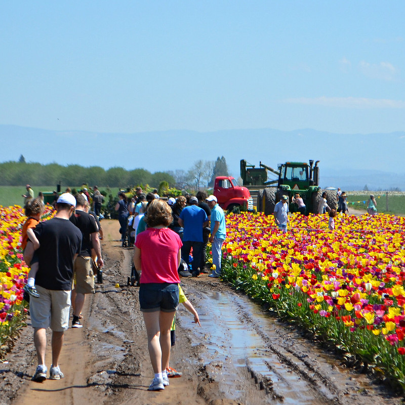 muddy_aisle_walkers_tulips_vehicles