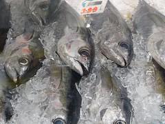 ハワイ島の魚