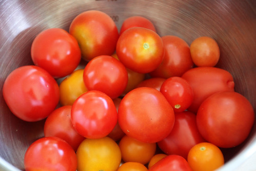 Tomatid meie endi kasvuhoonest / Tomatoes from our little greenhouse
