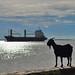 Diamond Harbour image
