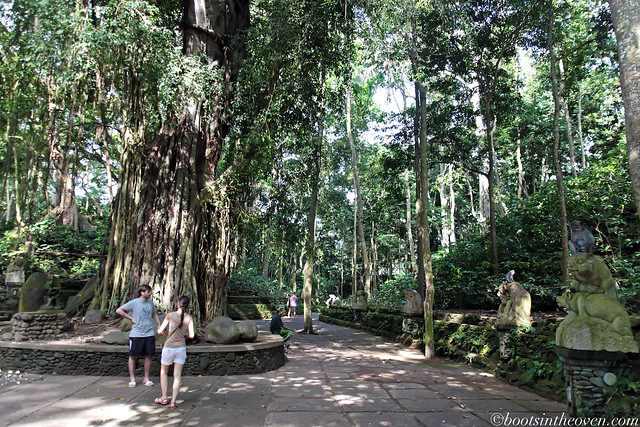 Pathways in the Sacred Monkey Forest