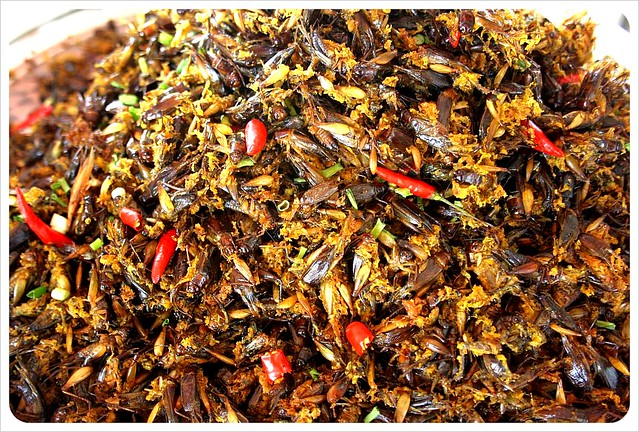 cambodia fried crickets