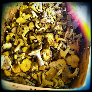 #Chanterelle success