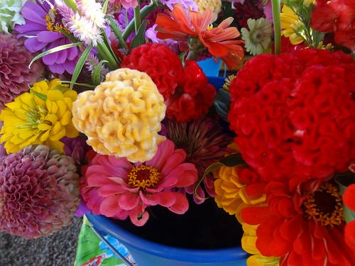 Petersburg Farmers Market July 28, 2012 (6)
