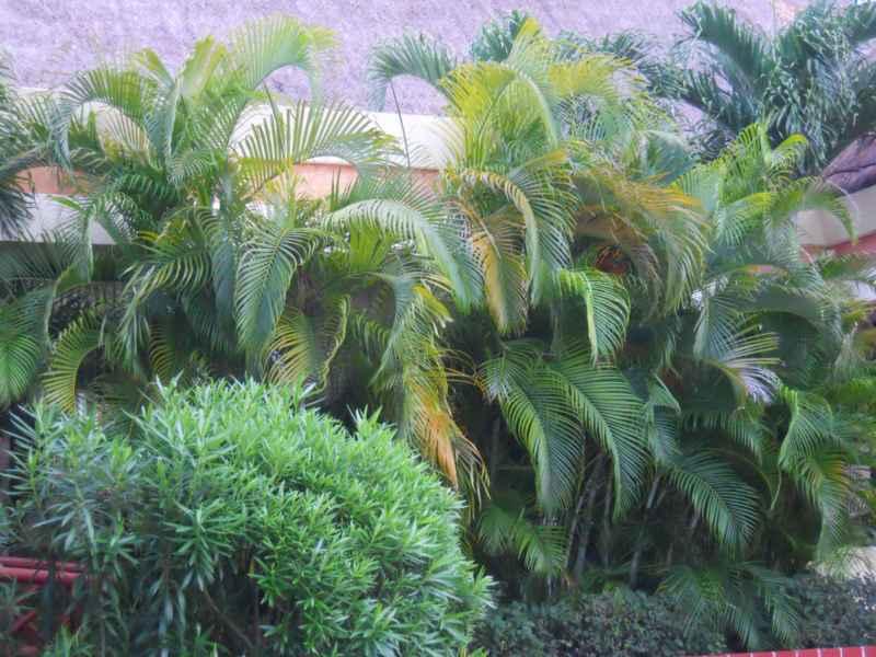 Jardines Bah�a Principe 8