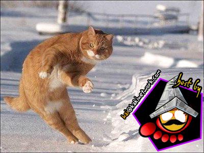 gambar kucing 04