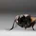 ¿Que mosca te ha picado? by Gabriman