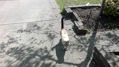 This cat greets me everytime I walk by