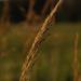 Grass_1412.jpg
