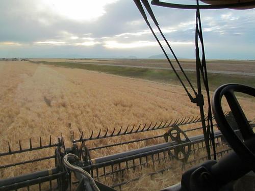 Z Crew - barley