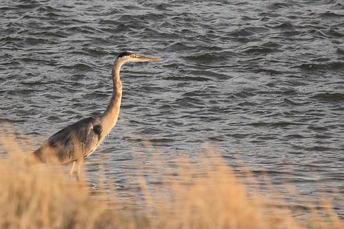 white heron river