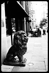 lion on Larimer Street