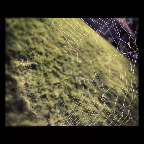 Spider web geometry by mrschwen